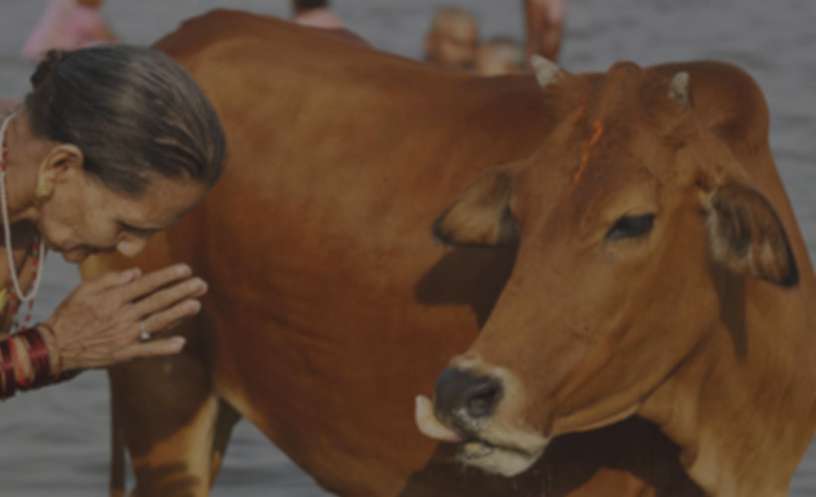 Indian Cow Based Oragnic Farming, Training & Research   govigyan com